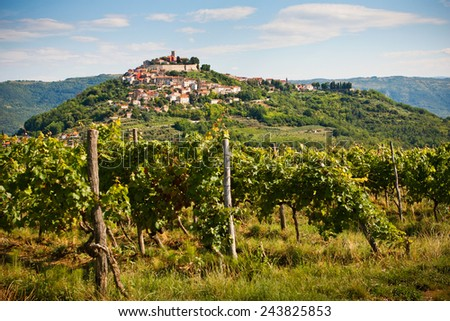 The city Motovun with vineyard- Istria - Croatia - stock photo