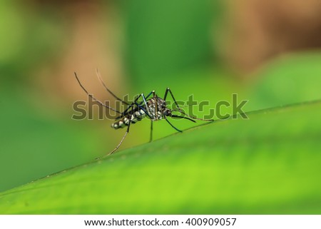 The close up macro photo of mosquitoes. - stock photo