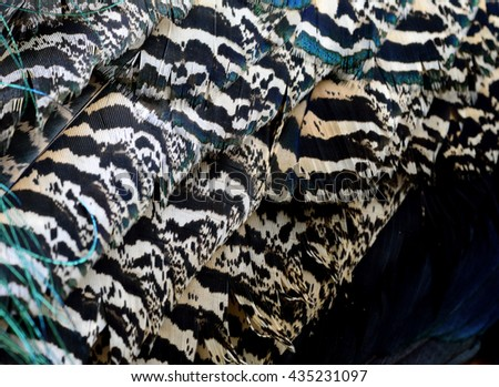 The close up of camouflage brown and black texture on Indian Peacock body feathers, the most beautiful bird feathers background - stock photo
