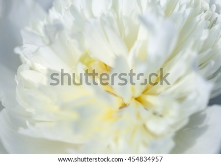The close up of white flower petal, shades of white, teal, soft dreamy image - stock photo