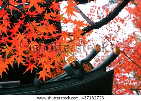 The close-up picture of many red autumn maple leaves with the eave of an ancient Japanese temple a background. Photoed in Gotokuji temple, Tokyo, Japan. - stock photo