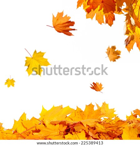 The colorful foliage in the autumn park - stock photo