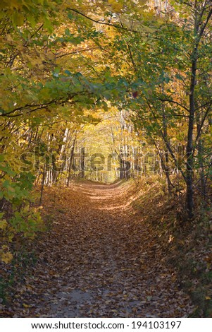 The Colors of Autumn in Canadian Rockies - stock photo