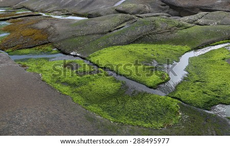The colourful shore of Gabriola Island, just off Vancouver Island, in British Columbia, Canada.  - stock photo