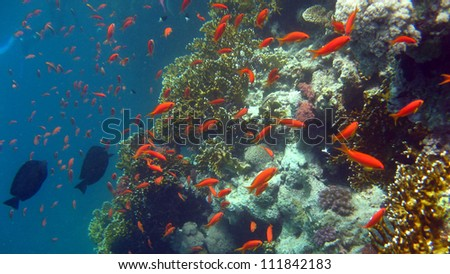 The coral reef of the Red Sea,Egypt - stock photo
