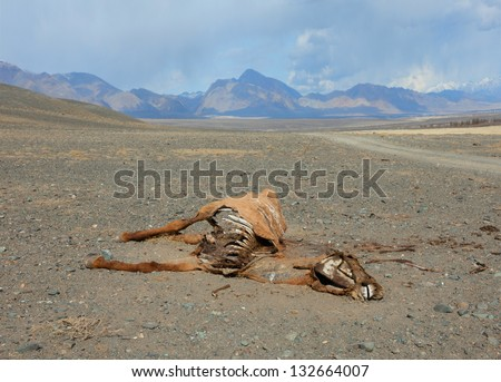 The corpse of a horse in the steppes of Mongolia - stock photo