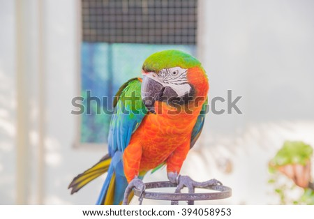 The court parrot, colorful parrot, beautiful parrots, parrots looking for parrots sitting, animals - stock photo