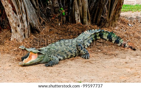 The Crocodile - stock photo
