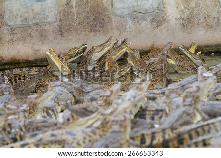 The crocodile in the water - stock photo