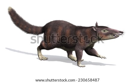 The cronopio is an extinct prehistoric mammal that lived during the Late Cretaceous Period, about 99 million years ago. - stock photo