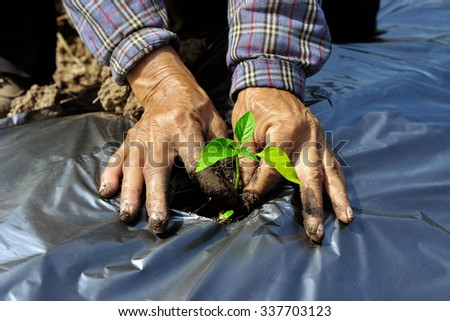 The cropping and covered with plastic for reduce water loss from the soil. - stock photo