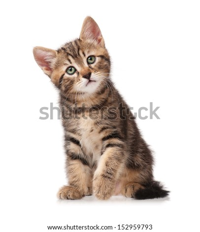 The curious kitten sits, having raised a forward pad isolated on white background - stock photo