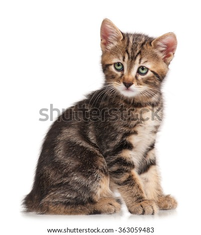 The curious little kitten isolated on white background - stock photo