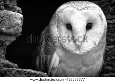 The Curious Owl - stock photo