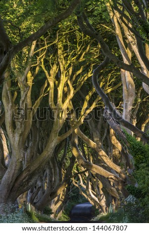 The Dark Hedges, Co. Antrim, Bregagh Road - Northern Ireland - stock photo