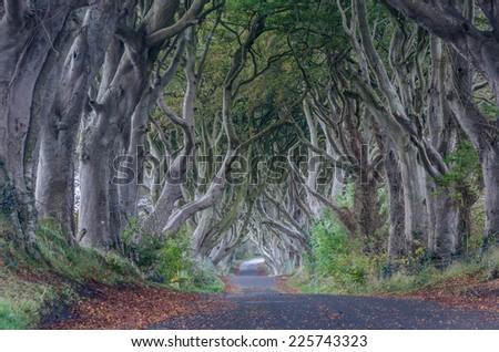 The dark hedges, Ireland - stock photo