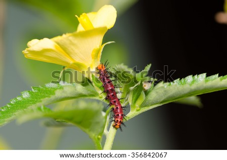 The Dark red caterpillar on green leaf and yellow flower - stock photo