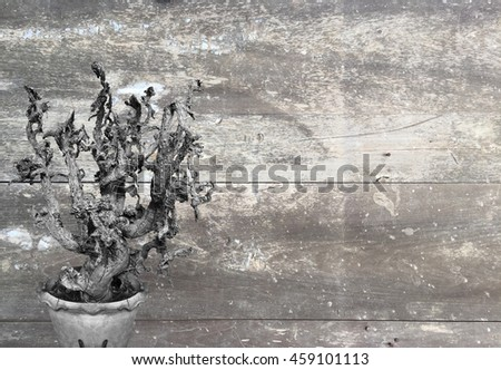 The dead cactus black and white with old wooden background. - stock photo