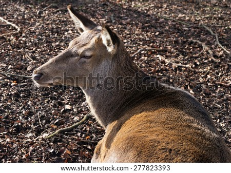 The deer in a forest in sunlight - stock photo