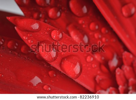 The detail shot - the flower and drops. - stock photo