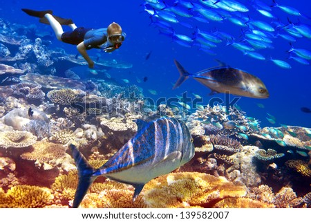 The diver over corals and tropical fishes - stock photo