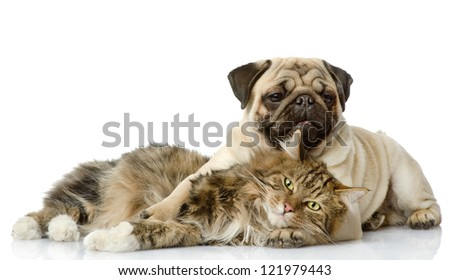 the dog and cat lie together. isolated on white background - stock photo