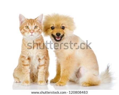 the dog and cat  look in the camera. isolated on white background - stock photo
