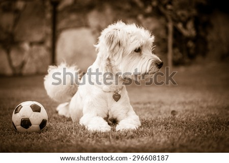the dog and his ball. Black and white - stock photo