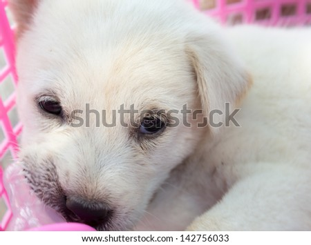 the dog baby eat to milk in bottle - stock photo