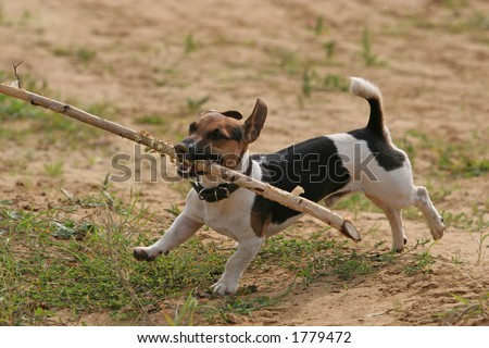 The dog brings stick - stock photo