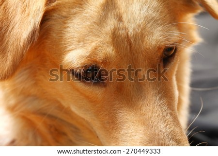 The dog brown hair color represent the pet concept related idea. - stock photo