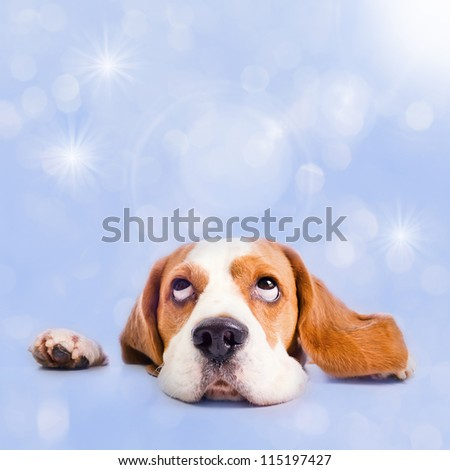 The dog dreams of Christmas gifts - stock photo