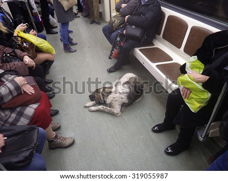The dog in the subway. Homeless. - stock photo