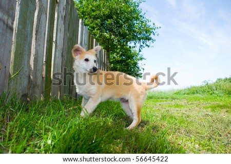 The dog on a grass - stock photo