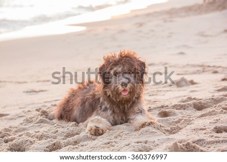 The dog on the beach. - stock photo