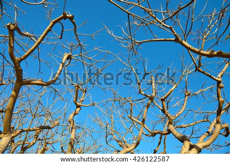 The dried tree against the blue sky - stock photo