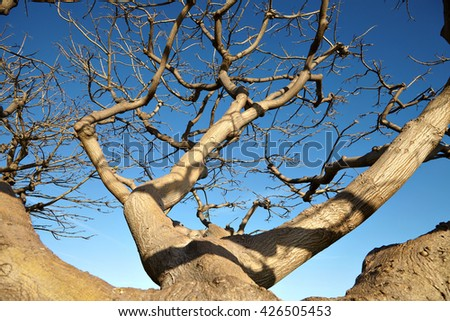 The dried tree against the blue sky. - stock photo