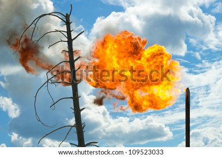 The dried-up tree. Pernicious consequences for the nature from products of combustion of passing gas - stock photo