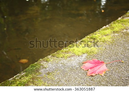 The dry maple leaf put on ground floor represent the autumn and botany concept related idea. - stock photo