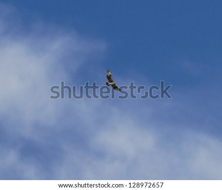 The eagle in the Lake Manyara National Park - Tanzania, Eastern Africa - stock photo