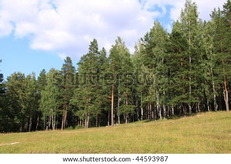 the edge of forest - stock photo