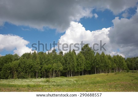 The edge of the forest, field, summer - stock photo