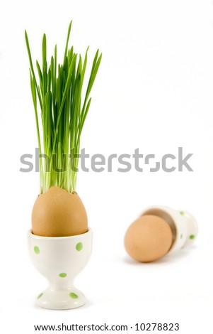 the egg in egg-cup with growing grass - stock photo