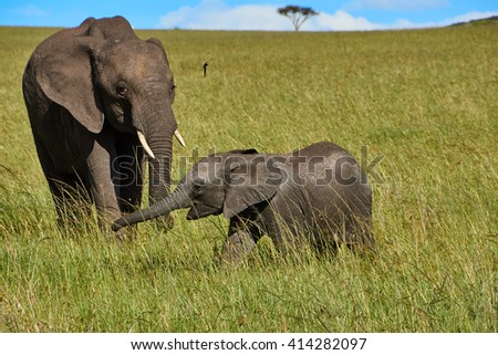 The elephant with the baby elephant for a walk in the african savannah - stock photo