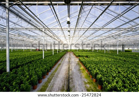 The endless rows of potted plants in a huge glasshouse - stock photo