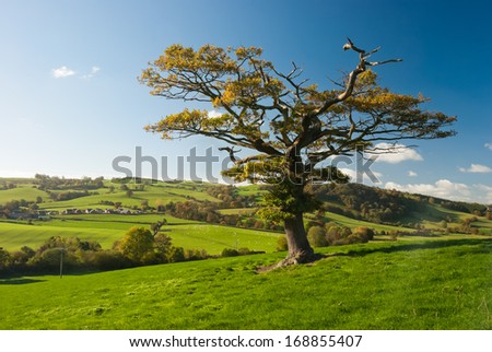 The English tree stand alone in the countryside - stock photo