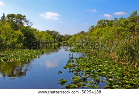 The Everglades in Florida - stock photo