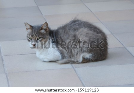 The evil cat on the floor. - stock photo