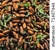 the exotic menu in thailand is fried insect - stock photo
