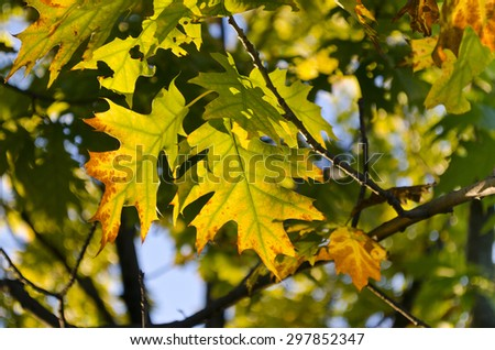 The Fall coming soon in vibrant colors  - stock photo